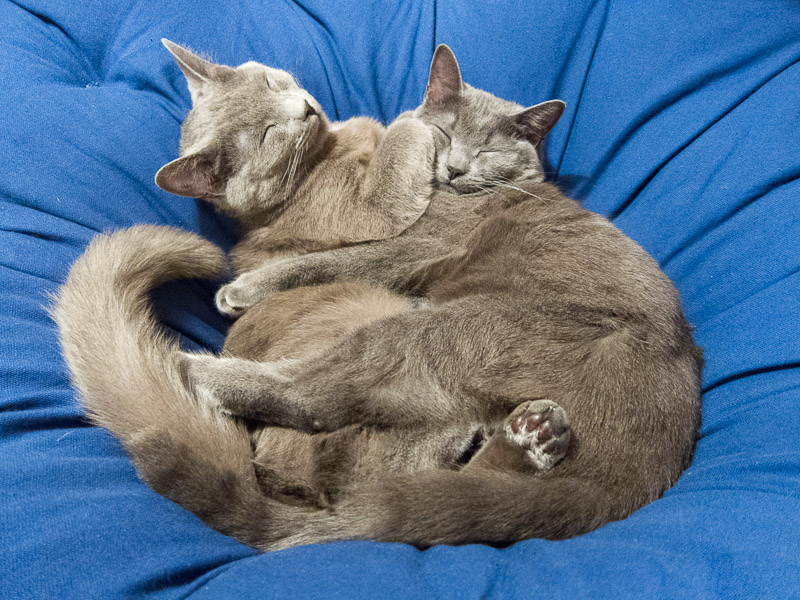 Cats cuddling at night